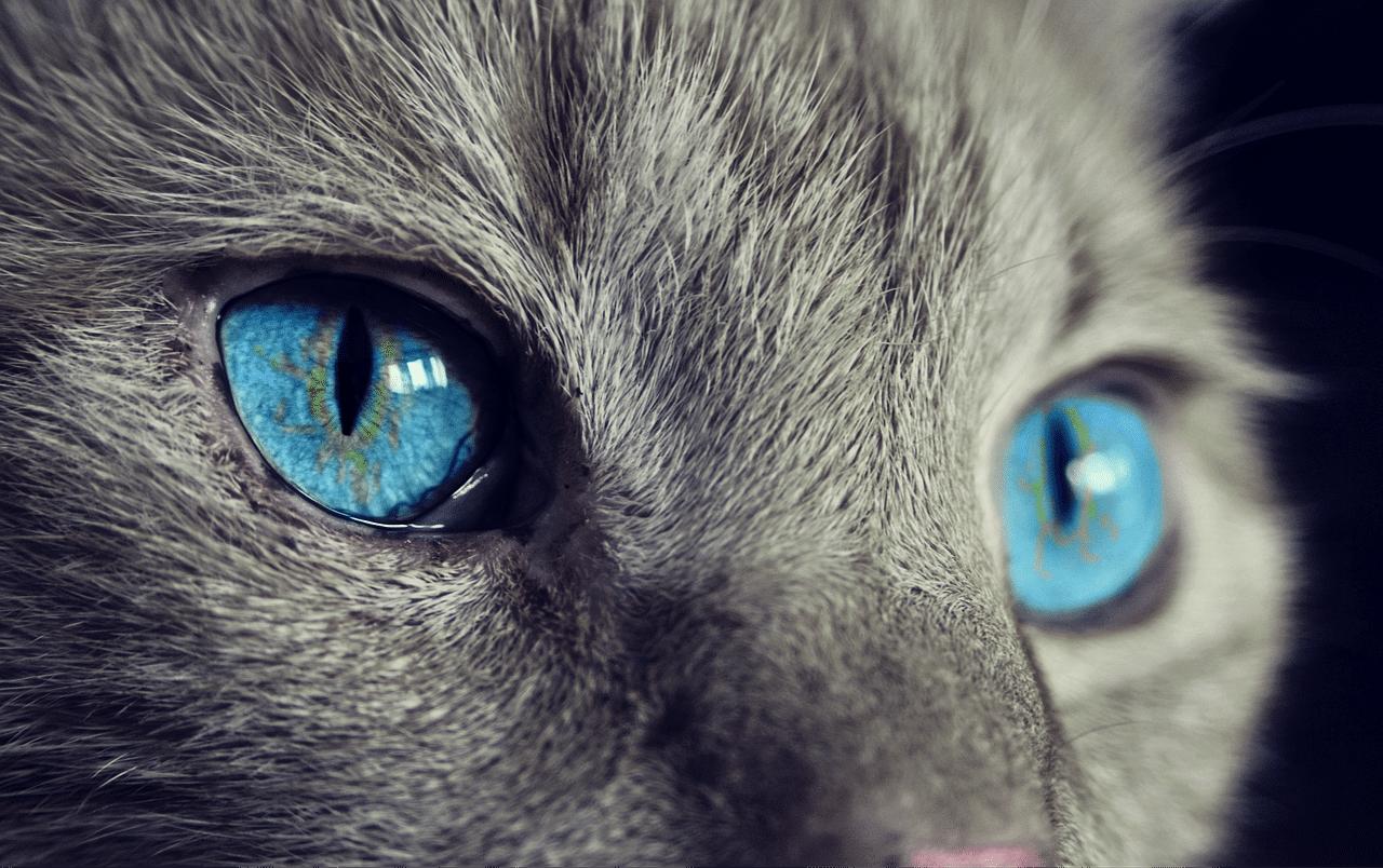 Tatouage patte de chat : l'essentiel à savoir
